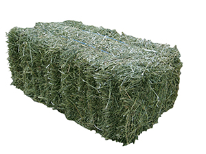 hay bale picture